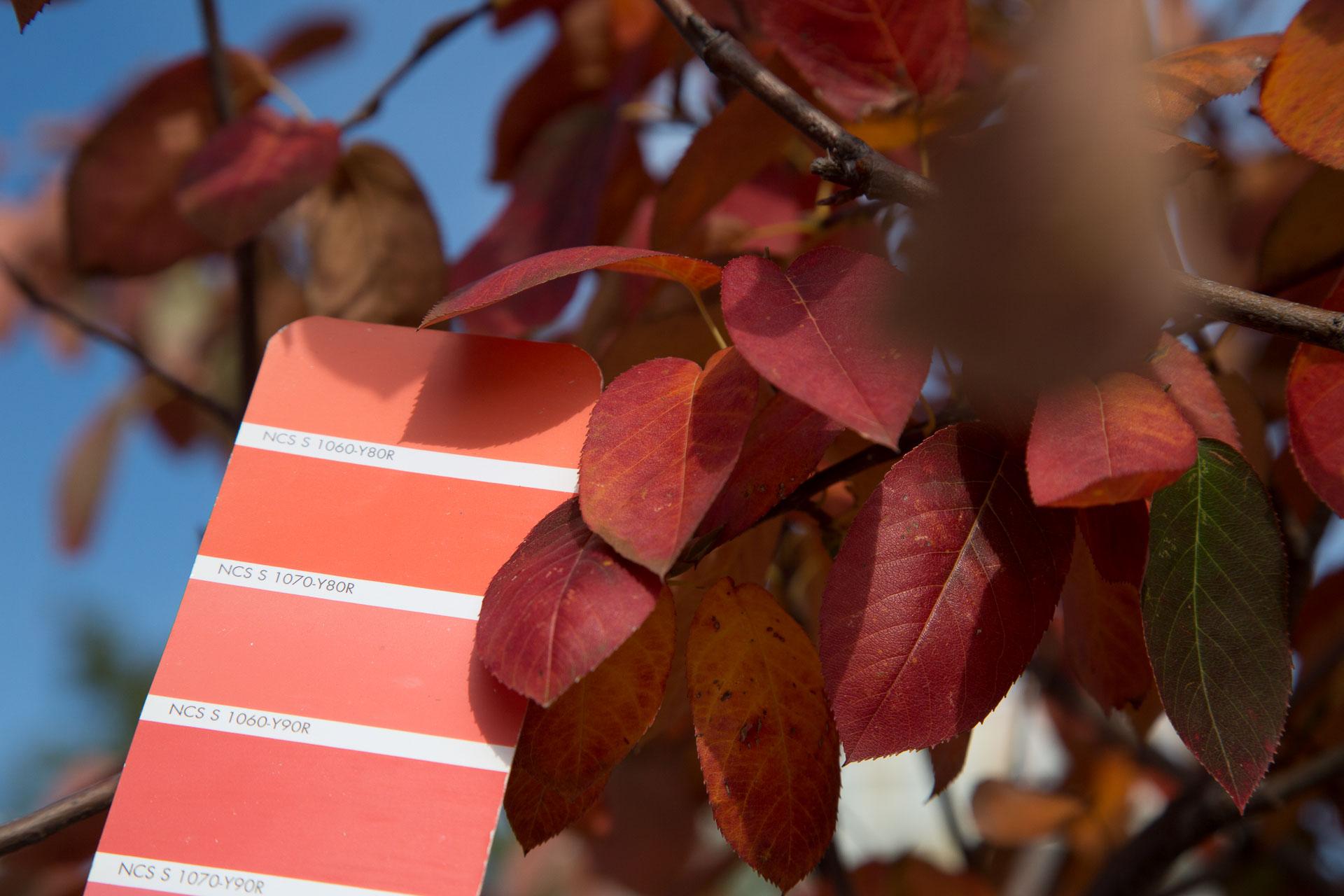 Nacarat Color Design_Couleur et Paysage